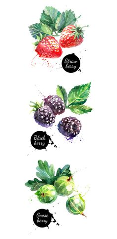 Watercolor Berries Vector Set - https://www.designcuts.com/product/watercolor-berries-vector-set/