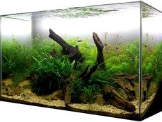 This is by any means a cheapest and very effective aquarium setup this method is not widely popular as it comes from the niche of planted aquariums. Diana Walstad is technical advisor for the AG...