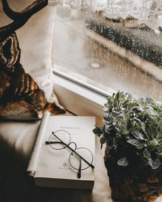 Today it's stormy and rainy out and I love it 😍 Perfect day to spend all day inside and do nothing but read. I'm hoping to finish my… Cozy Nook, Autumn Trees, Book Worms, It Is Finished, Gift Wrapping, My Love, Ivy, Prints, Pictures