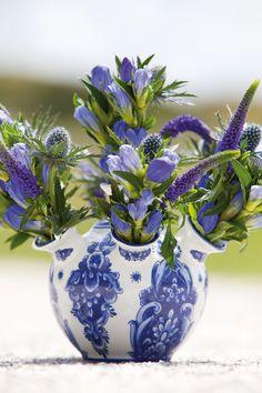 Flower of november: Veronica #blue