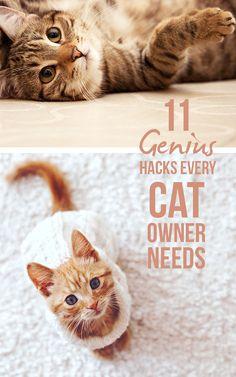 11 Genius Hacks Every Cat Owner Needs