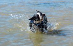 Time for swim with Otis
