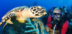 """Red Sail Sports Offers an Unbeatable Dive Deal During Grand Cayman's """"Legends and Lions"""" Celebration This October  #scuba #diving #dive #trip #travel #holiday #CaymanIslands #GrandCayman #LegendsAndLions #lionfish"""