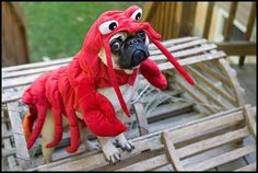 Funny Lobster Pug Costume   Funny Pug Pictures