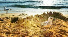 Seabirds on a sandy beach (Astir Beach - Vouliagmeni )