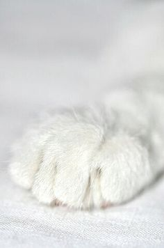 (closeup of a beautiful white cat paw; precious. would be a good gift to do this for any cat mom. Georganna Louise)