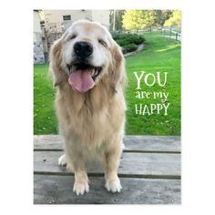 Golden Retriever Dog You Are My Happy Postcard - postcard post card postcards unique diy cyo customize personalize