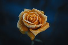 35PHOTO - Инна Сухова - ***