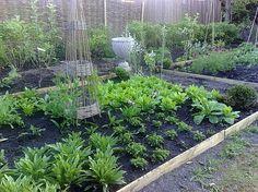 Beautiful backyard garden! Traditional Landscape by Modern Country Lady