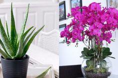 O picătură de iod și nu-ți vei recunoaște grădina! Acesta este un remediu împotriva fitoftorozei, mucegaiului alb și dăunătorilor. - Fasingur Thing 1, Good To Know, Mai, Plant