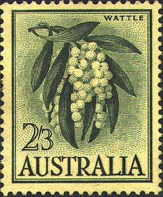 9 Sept 1959 Same image on white paper was issued on 28/10/64. Designer: Margaret Stones  Plant: Acacia pycnantha  Family: Mimosaceae (Leguminosae)  Golden Wattle Medium shrub or small tree to 10m. Golden ball-shaped flowers in spring. Occurs in NSW, Vic, Sth Aust. (naturalised in WA). National floral emblem of Australia.