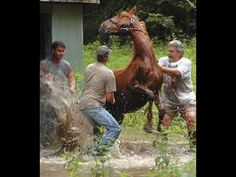 COMO ENTRENAR A TU CABALLO - YouTube