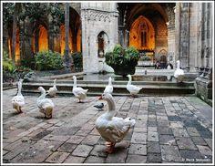 Barcelona -- La Catedral de la Santa Cruz y Santa Eulalia - dziwnowik…