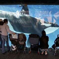 Park leaders out in big shakeup at SeaWorld