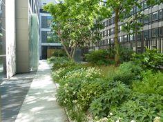 Atelier Alice Tricon / Jardins / Paysages - JARDIN DE SEUIL CAPITAL 8 - RUE LANCEREAUX PARIS (75) - Entrée Lancereaux Capital 8 Alice Tricon