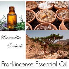 Frankincense Oil, Frankincense Essential Oil, Essential Oil Frankincense -- 100% Pure Authentic Frankincense EO