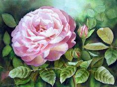 'David Austin's Rose Heritage' - Beautiful Pink Rose Garden Painting in Watercolor