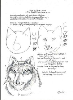 How to Draw Worksheets for The Young Artist: How to Draw a Wolf - A Drawing Skill Builder for A Young Artist