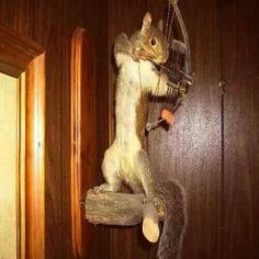 This is awesome!! I am gonna shoot a squirrel and mount it like this!