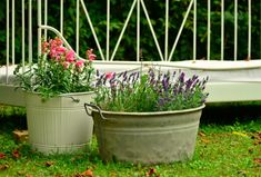 Container Gardening For Beginners Think you don't have enough time or space for a garden? Try a container garden! - Think you don't have enough time or space for a garden? Try a container garden! Growing Lavender, Growing Herbs, Growing Vegetables, Potted Lavender, Gardening For Beginners, Gardening Tips, Culture D'herbes, Water Saving Tips, Fall Containers