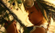 9 Tips para escoger el mejor pino de Navidad para tu familia