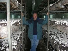 Learn here how to grow mushrooms at home: http://impartialreviews.org/mushroom-groving-4-you/