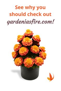 Wouldn't you love a gourmet gift from Gardenia's Fire?