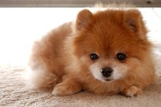 Such a cute snuggable face