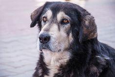 Senior Pet Care | All Creatures Veterinary Hospital of Brookyln