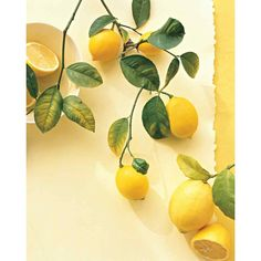 Lemon Recipes ❤ liked on Polyvore featuring backgrounds