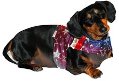 The Lucky Star harness vest set 5 sizes by DownUnderDogDesigns, $75.00