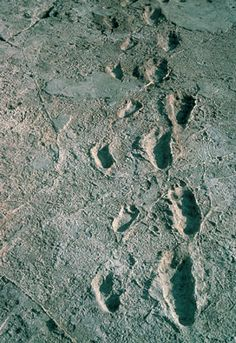 LAS LÍNEAS DE HUELLAS DE [LAETOLI] HOMÍNIDOS, descubiertas en 1976-1977 por Mary Leakey, Richard Hay y su equipo, están preservadas en ceniza de una erupción del volcán Sadiman, a 20 km de allí. [http://es.wikipedia.org/wiki/Laetoli#Las_huellas]