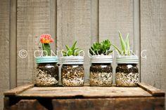 petite plante grasse ou cactus en pot masson