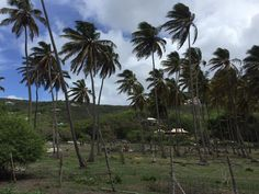 One month on the island of St. Vincent and the Grenadines for medical school