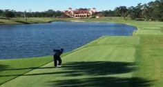 Golfer Drills Duck Out of the Sky with a Murderous Drive