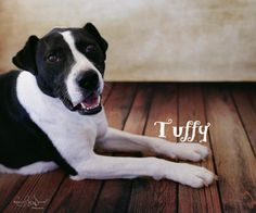 Tuffy - URGENT - THE HAVEN ANIMAL CARE SHELTER in Lubbock, TX - ADOPT OR FOSTER - Adult Neutered Male Border Collie/Terrier Mix
