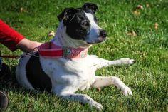 ADOPT Daisy at Dog House Adoptions!