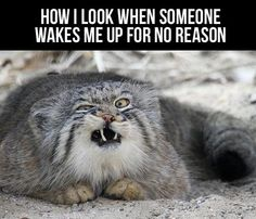how I look when someone wakes me up for no reason