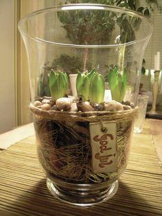 Reproduccion asexual de las plantas por bulbos de tulipan