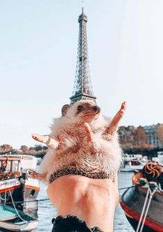 Dec 2019 - About little hedgehog and his life✨. See more ideas about Cute hedgehog, Hedgehog and Cute animals. Baby Animals Super Cute, Cute Little Animals, Cute Funny Animals, Cute Dogs, Baby Animals Pictures, Cute Animal Pictures, Animals And Pets, Hedgehog Pet, Cute Hedgehog