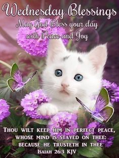 Wednesday Prayer, Wednesday Greetings, Blessed Wednesday, Happy Wednesday Quotes, Wednesday Morning, Good Morning, Isaiah 26 3, Perfect Peace, Blue Mosaic