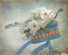 Stuff that dreams are made of - flowers and a vintage bike basket