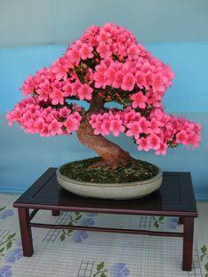 Bonsai Art, Bonsai Plants, Bonsai Garden, Bonsai Trees, Bonsai Maple Tree, Bonsai Tree Types, Planting Succulents, Planting Flowers, Succulent Plants