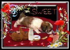 Curious Puppie - food, puppie, little dog, milk, dog, sweet Dog Milk, Dog Wallpaper, Free Dogs, Little Dogs, Puppies, Sweet, Animals, Food, Little Puppies