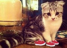 This cat is killing me with cuteness XD