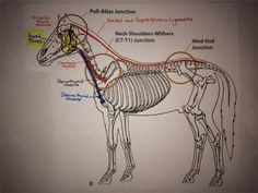 """""""The TMJ and a Whole-Horse Approach to Knowledge"""""""