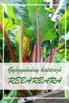 A Rebarbara népies neve:  Rebarbaragyökér.  Hogyan gyűjtsük a Rebarbara gyógynövényt?  Gyógyászati célokra a növény föld alatti szervét, a gyökértörzsét használják.  A Rebarbara hatóanyagai:  A rebarbara gyökértörzs tartalmaz antrakinon glikozid keveréket (reumemodin-, aloéemodin- és reinglikozidok), diantron glikozidokat, cserzőanyagokat és flavonoidokat. Celery, Herbalism, Cancer, Herbs, Vegetables, Health, Tips, Plant, Herbal Medicine