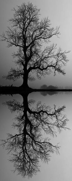 Tree black and white photography beautiful 26 trendy Ideas Pretty Pictures, Cool Photos, Landscape Photography, Nature Photography, Landscape Pics, Motion Photography, Reflection Photography, Abstract Landscape, Tree Of Life