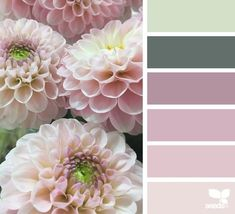 today's inspiration image for { flora hues } is by . thank you, Steph, for another beautiful image share! Colour Pallette, Colour Schemes, Color Combos, Color Harmony, Color Balance, Creative Colour, Design Seeds, Paint Colors For Home, Color Stories