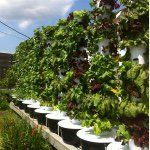 Hydroponic Gardening, Aquaponics, Almost Ready, Grow Your Own, Permaculture, Farming, Projects To Try, Container, Indoor